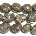 Turritella Agate 12 x 16mm tumbled nugget mixed colors