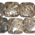 Turritella Agate 30mm square mixed colors